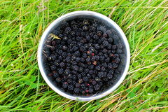 Berries. Wild blackberries in a field Royalty Free Stock Photos
