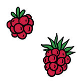 Berries. Wild forest reb berries clipart sweet fruits food vector illustration