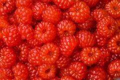 Berries of wild raspberry 8 Stock Photo