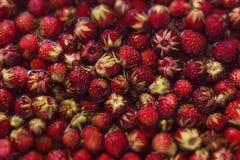 Berries Stock Photos