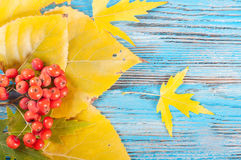 Berries and yellow leaves Stock Photo