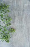 Berro chino en fondo de madera Imagen de archivo