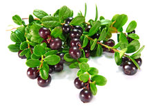 Berry сowberry Royalty Free Stock Image