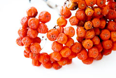 Berry Stock Photography