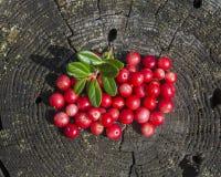 Berry4 Stockbilder