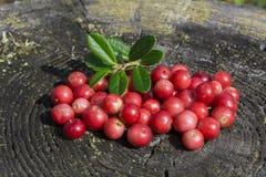Berry3 Stockbild
