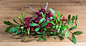 Berry,autumn,forest,woods,colors. Autumn forest berries collected in a nature reserve Stock Image