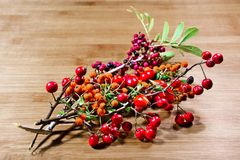 Berry,autumn,woods,colors. Mixed of autumn forest berry of varius types Royalty Free Stock Image