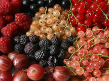 Berry background Royalty Free Stock Images