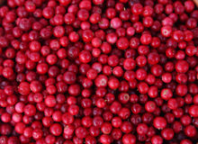 Berry background. Red appetizing berry background photo royalty free stock photography