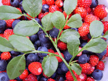 Berry background. With strawberry and blueberry Royalty Free Stock Photos