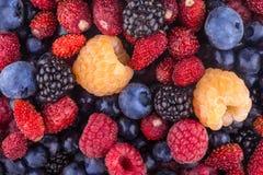 Berry background Stock Photos