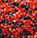 Berry background of strawberries and blueberries stock photos