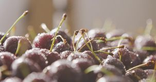 A women hand puts a ripe cherry on a berry background of wet cherries with droplets of water. Splashes of water on a. On a berry background of wet cherries with stock video