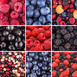 Berry backgrounds Royalty Free Stock Images