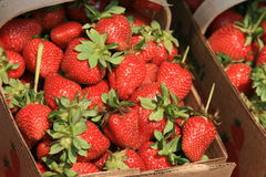 Berry Basket 2. Fresh picked strawberrys for sale at a roadside stand in Concord, NC Stock Image
