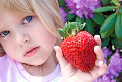 Berry Big. Little girl holding a big strawberry royalty free stock photo