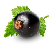 Berry of black currant Royalty Free Stock Images