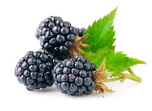 Berry blackberry with green leaf Stock Photos