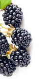 Berry blackberry with green leaf Royalty Free Stock Images