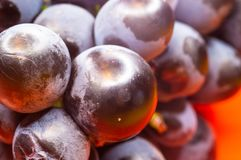 Berry blue wine grapes on a red saucer Stock Photography