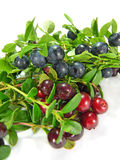 Berry  blueberries and сowberry Stock Image