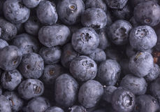 Berry blueberry Royalty Free Stock Photography