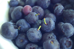 Berry bowl royalty free stock image