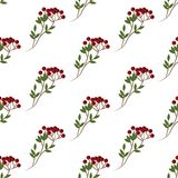 Berry branch pattern. Isolated on white background. Vector illustration Royalty Free Stock Photo