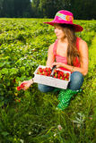 Berry checking Royalty Free Stock Image