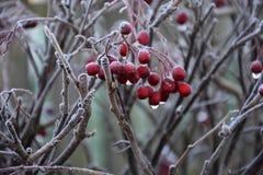 Berry Close Up 2 Fotografía de archivo