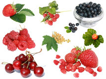 Berry collection Stock Photography