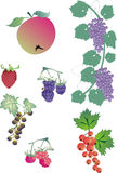 Berry collection Royalty Free Stock Photos