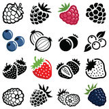 Berry collection. Berry fruit icon collection - illustration royalty free illustration