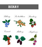 Berry collection of sketches set. vector Royalty Free Stock Images