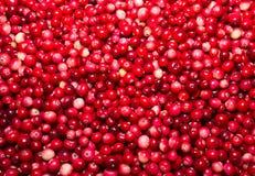 Berry Cranberry Stockbilder
