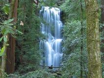 Berry Creek Falls Royalty Free Stock Photos