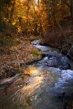 Berry Creek royalty free stock photo