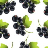 Berry Currant Background Pattern noir mûr détaillé réaliste Vecteur illustration libre de droits