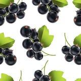 Berry Currant Background Pattern preto maduro detalhado realístico Vetor ilustração royalty free