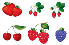 Berry D Stock Image