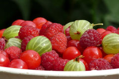 Berry delicious platter Royalty Free Stock Photo