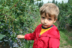 Berry farm Royalty Free Stock Images