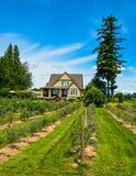 Berry farm house with bluebbery shrubs in front and blue sky background stock photography