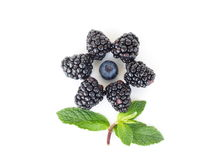 Berry flower Royalty Free Stock Image