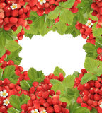 Berry frame Stock Images