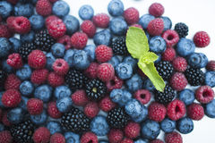 Berry. Fresh summer wild berry fruits like blueberries, raspberries and blackberries Stock Photos