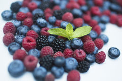 Berry. Fresh summer wild berry fruits like blueberries, raspberries and blackberries Royalty Free Stock Images