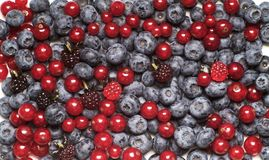 Berry fruit Stock Image