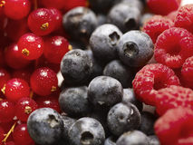 Berry fruit Stock Photos
